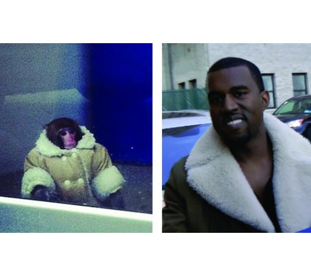 В Канаде обезьяна в пальто зашла в магазин IKEA. Изображение №11.