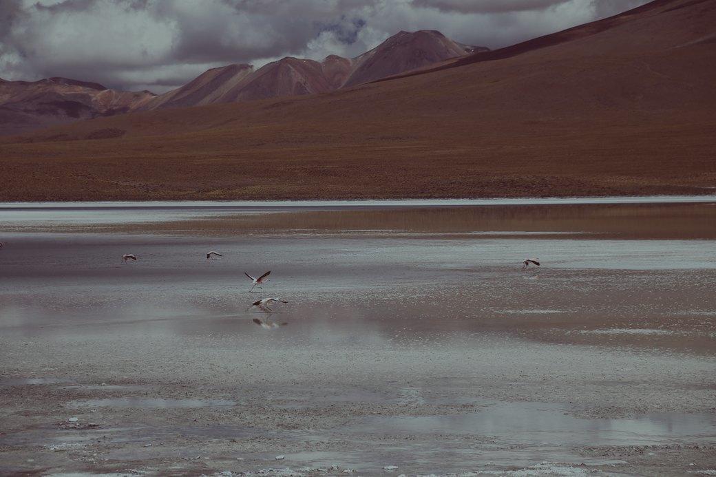 Буря в пустыне: Фоторепортаж с ралли «Дакар-2014» . Изображение № 42.
