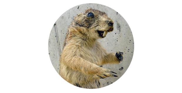 Дура набитая: 10 необычных чучел на eBay. Изображение № 6.