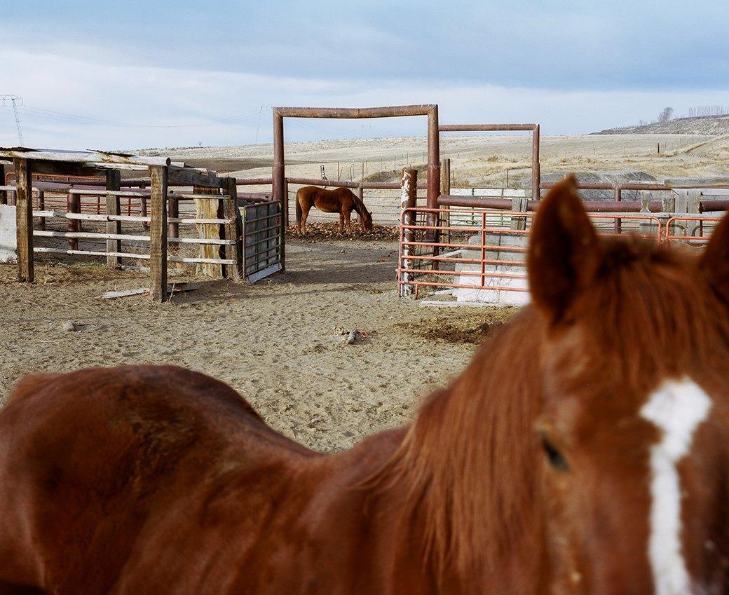 Бытовая жизнь работников бизоньего ранчо в США . Изображение № 26.