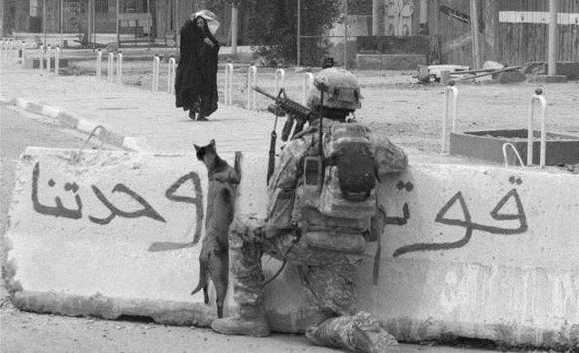 Противотанковые собаки, мышиные бомбы и другие животные на войне. Изображение № 4.
