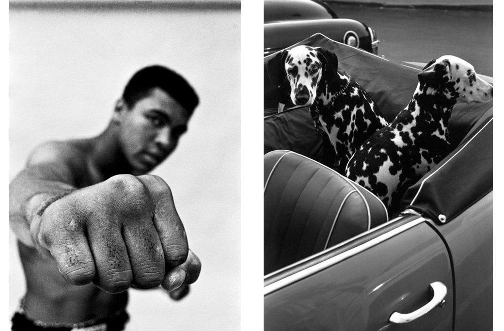 20 снимков, которыми гордится компания Leica. Изображение № 15.