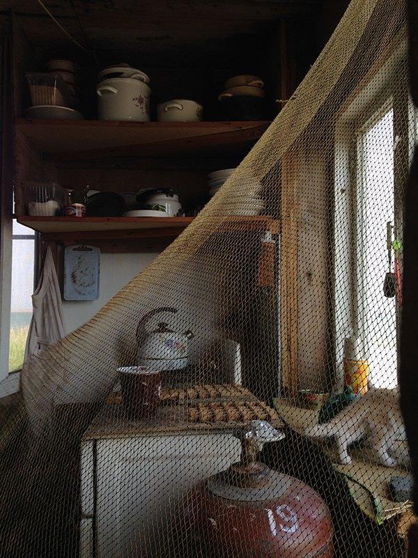 Чайки, рыба и фантастические романы: Как я уехал от людей жить на остров. Изображение № 10.