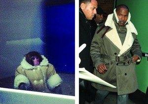 Суд по делу обезьяны в пальто из IKEA состоится в мае. Изображение № 5.