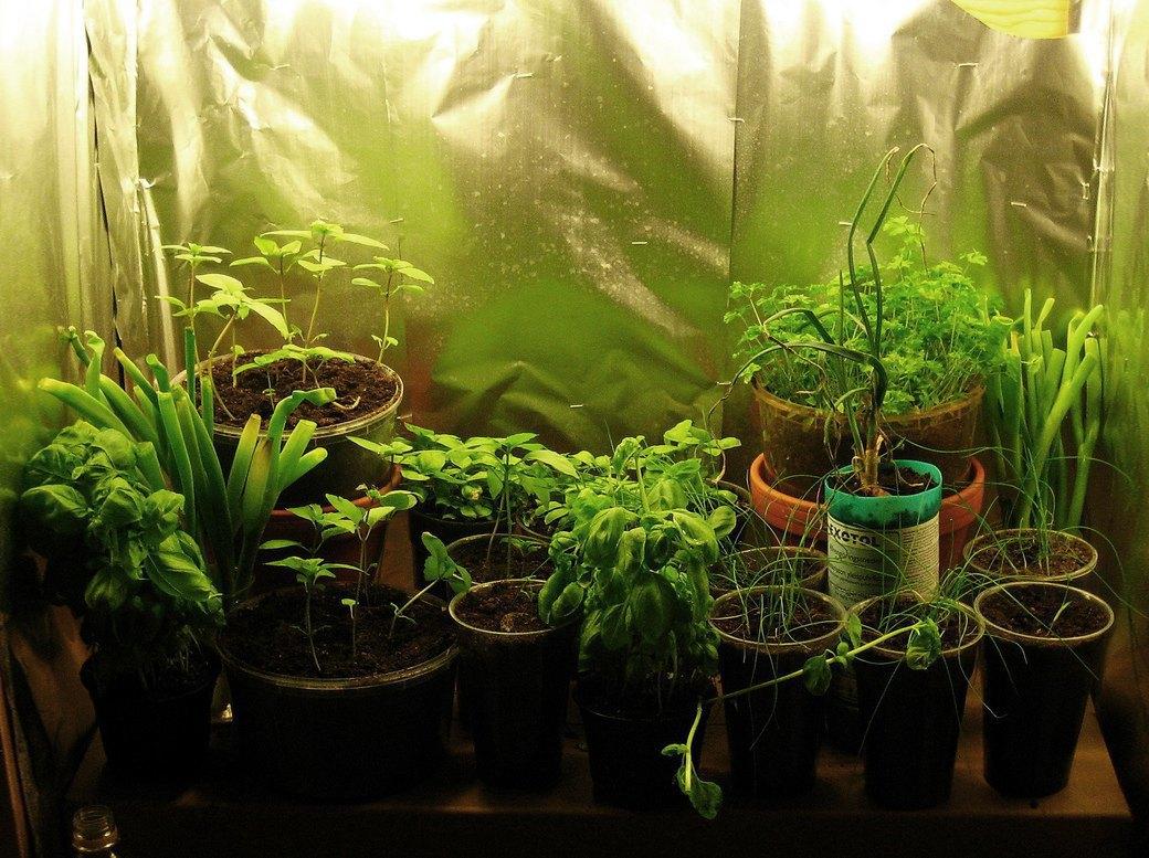 Ультимативный гид по выращиванию в домашних условиях. Изображение № 1.
