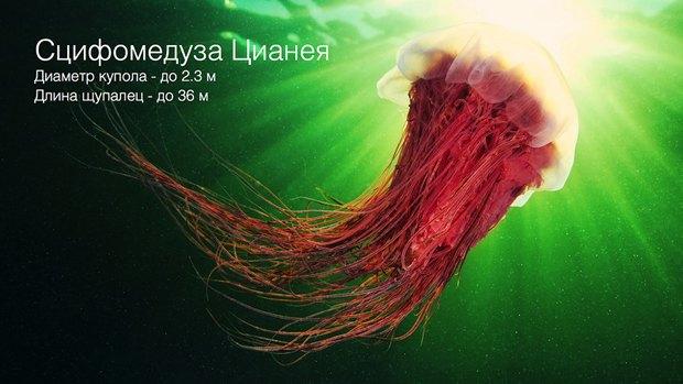 Российские ученые-энтузиасты собирают 1,5 млн рублей на кругосветную экспедицию. Изображение № 2.