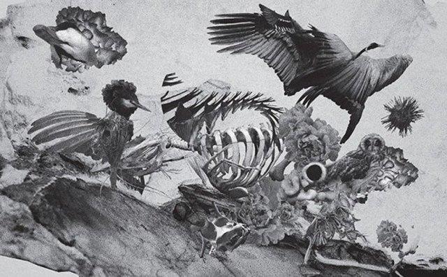 Муджус о своей персональной выставке «Метаморфозы» и мультимедийном искусстве. Изображение № 2.