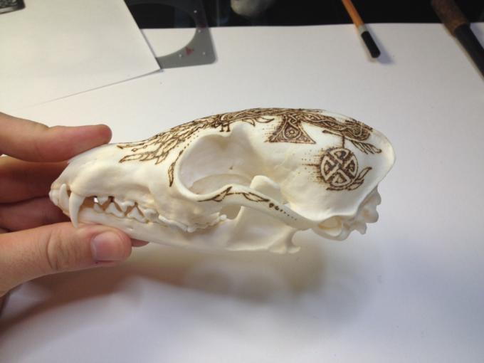 Питер Дроус: Пирография на черепах диких зверей. Изображение № 7.