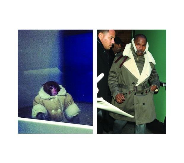 В Канаде обезьяна в пальто зашла в магазин IKEA. Изображение №12.