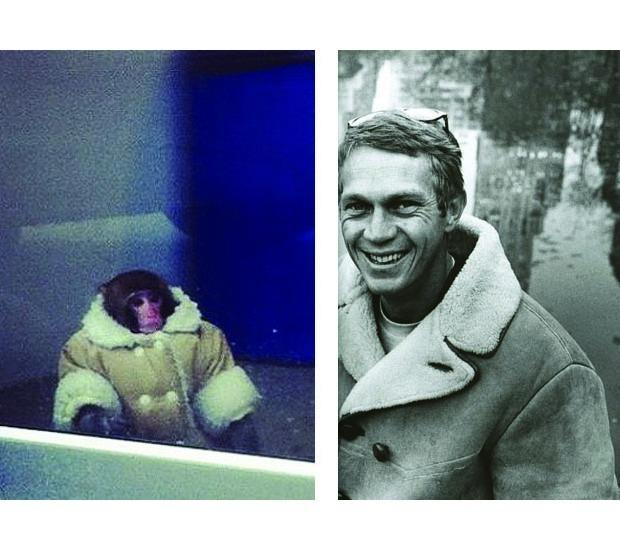 В Канаде обезьяна в пальто зашла в магазин IKEA. Изображение №13.