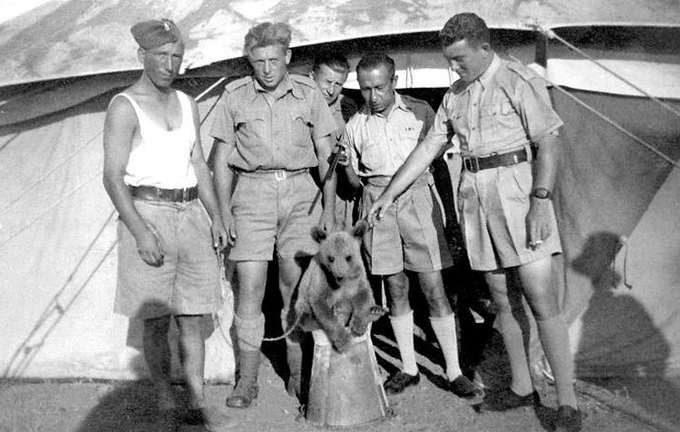 Как обезьяна-капрал, медвежонок-рядовой и другие животные помогали солдатам на войне. Изображение № 10.