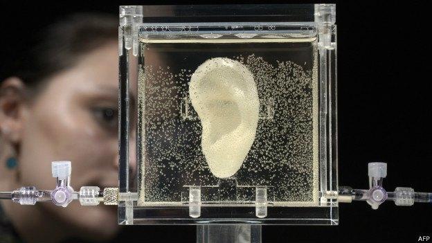 Немецкая художница вырастила точную копию уха Ван Гога. Изображение № 1.