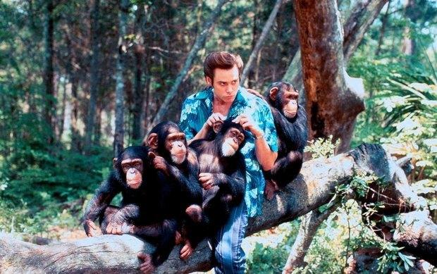 Джим Керри снимется в новом фильме режиссера «Эйса Вентуры». Изображение № 1.