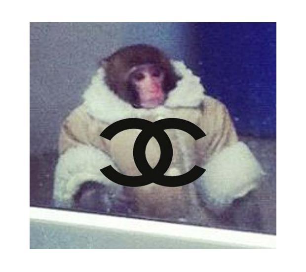 В Канаде обезьяна в пальто зашла в магазин IKEA. Изображение №19.