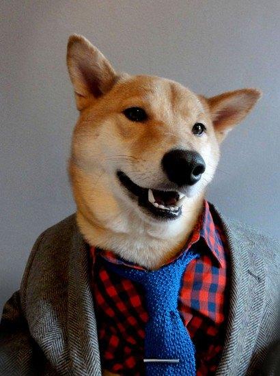В новом блоге на Tumblr собака демонстрирует мужскую одежду. Изображение № 3.