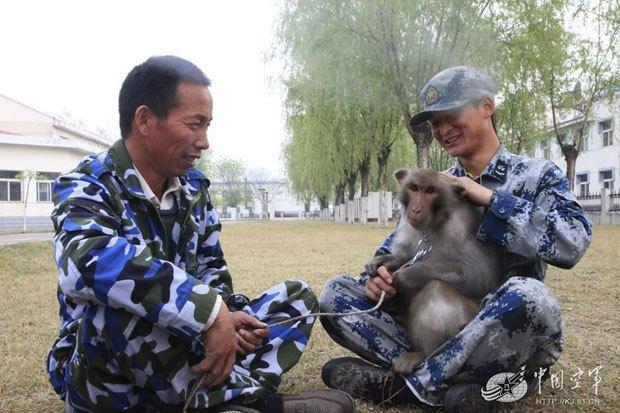 Китайские ВВС взяли на службу взвод обезьян. Изображение № 3.