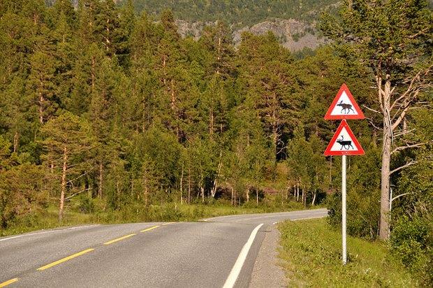 В Норвегии тестируют новые «диско-датчики» для отпугивания лосей. Изображение № 1.