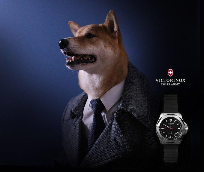 Как стильная собака стала зарабатывать больше тебя: История успеха menswear dog. Изображение № 2.