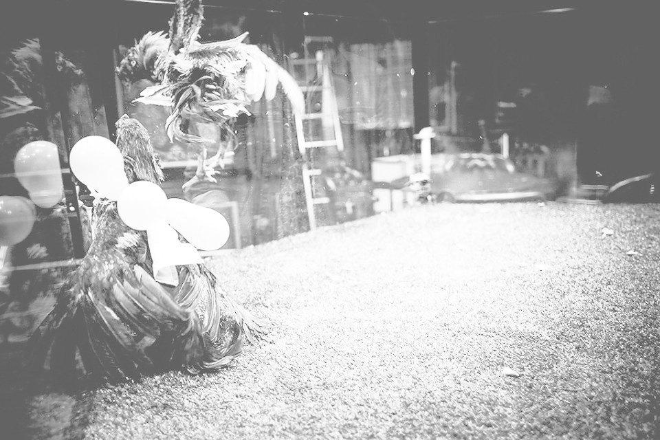 Энгри Бердс: Репортаж с тренировки бойцовых петухов. Изображение № 10.