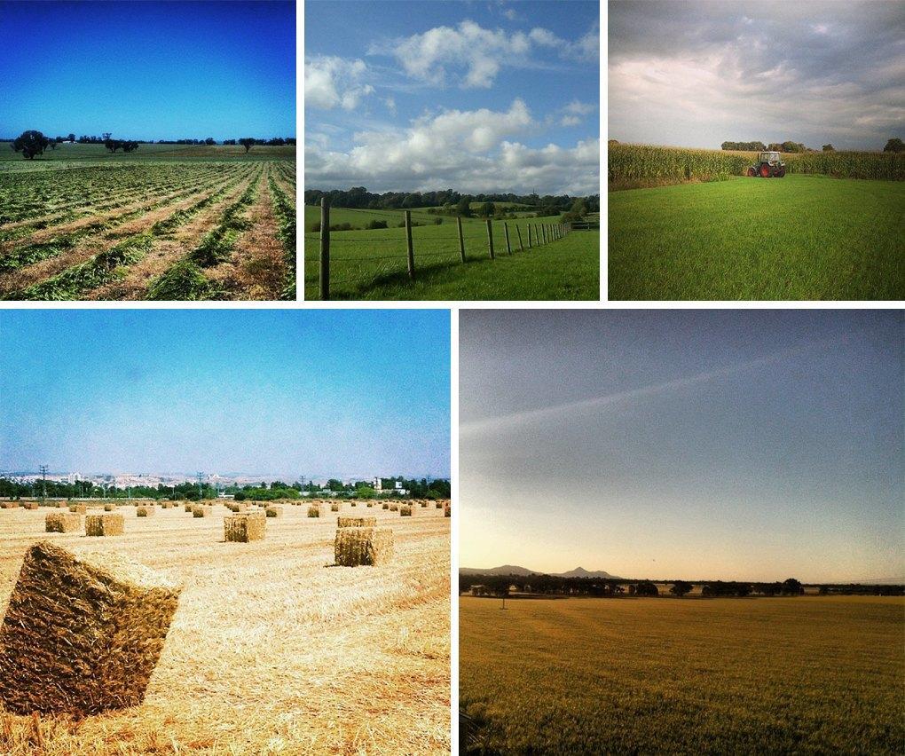 Что публикуют в своих Instagram фермеры разных стран. Изображение № 7.