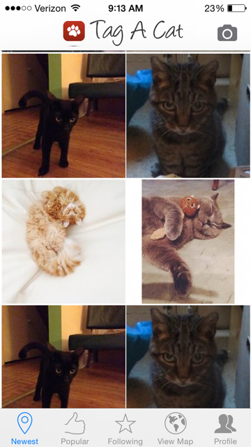 Для владельцев iPhone и iPad выпустили Instagram для котов . Изображение № 1.