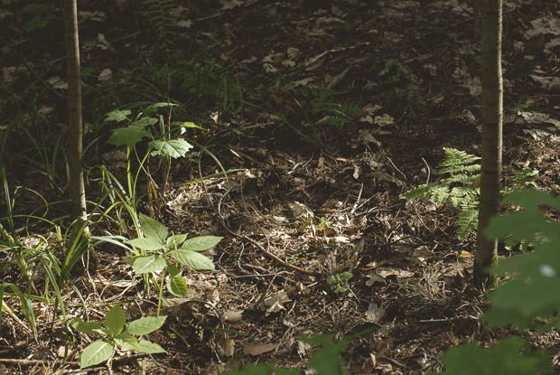 Начало эксперимента: Редакция FURFUR посадила хэритейдж-лук. Изображение № 2.