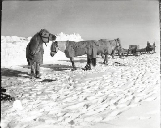Считавшиеся утерянными фотографии Антарктики были выставлены в британских музеях. Изображение № 3.