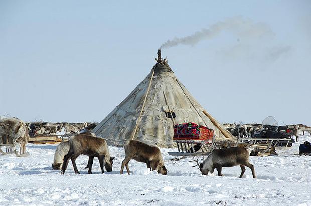 «Были только мы, олени, опять олени и рыба»: 7 дней английского телеведущего на Ямале. Изображение № 7.