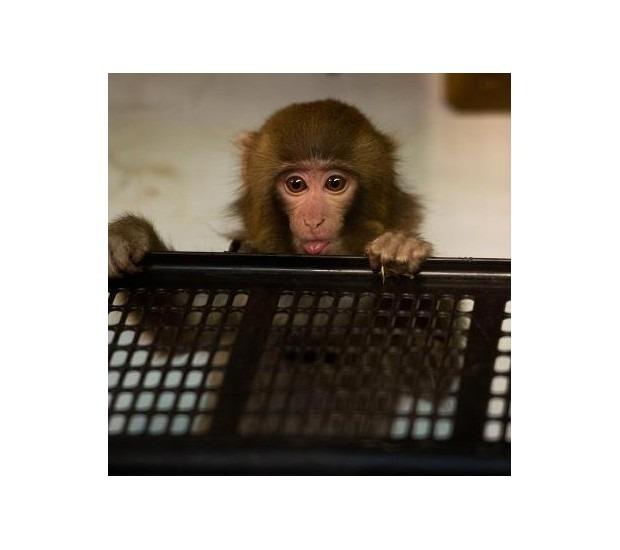 В Канаде обезьяна в пальто зашла в магазин IKEA. Изображение №9.