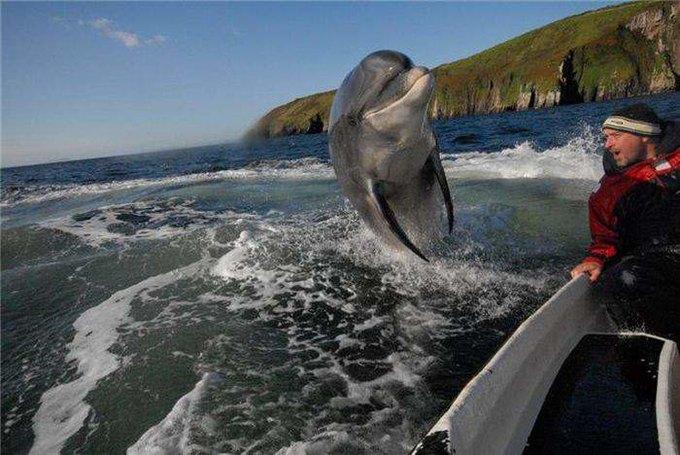 Учёные начнут общаться с дельфинами с помощью нового прибора. Изображение № 1.