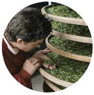 Чайный пьяница: Путеводитель по чаю тегуаньинь. Изображение № 10.