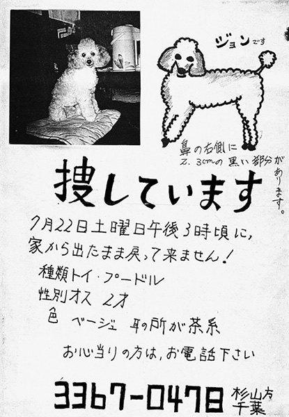 Художник превратил объявления о пропаже животных в арт-проект. Изображение № 4.