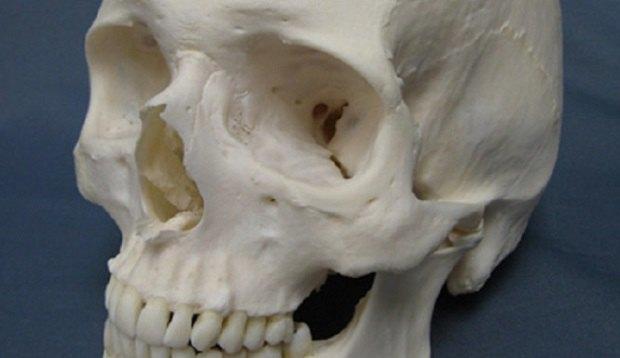 Аноним со странностями отдал три человеческих черепа в комиссионный магазин. Изображение № 1.