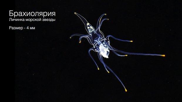 Российские ученые-энтузиасты собирают 1,5 млн рублей на кругосветную экспедицию. Изображение № 9.