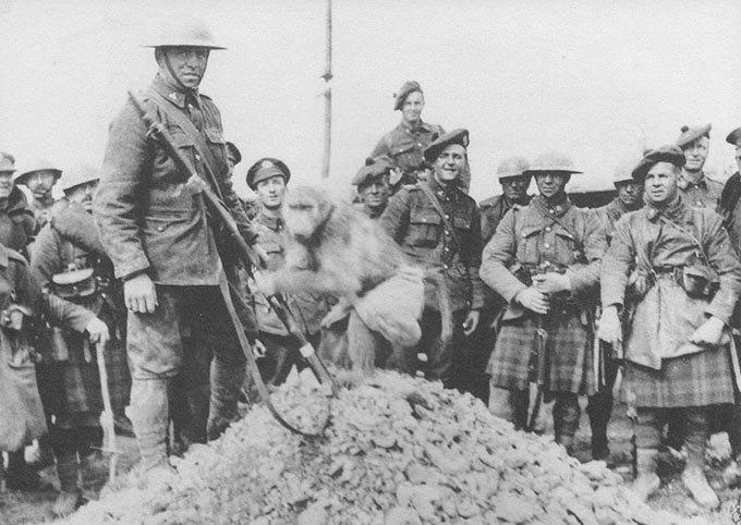 Как обезьяна-капрал, медвежонок-рядовой и другие животные помогали солдатам на войне. Изображение № 3.