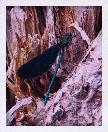 Фоторепортаж: Как я плавал на каяке. Изображение № 28.