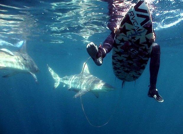 Австралийский сёрфер не обратил внимания на укусившую его акулу. Изображение № 1.