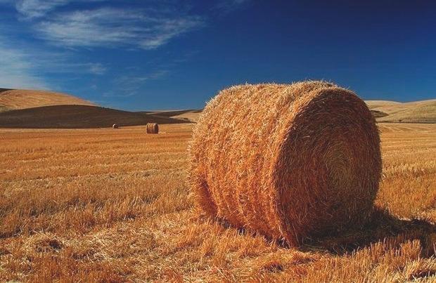Деревенский житель украл полторы тонны сена для своей любимой девушки. Изображение № 1.