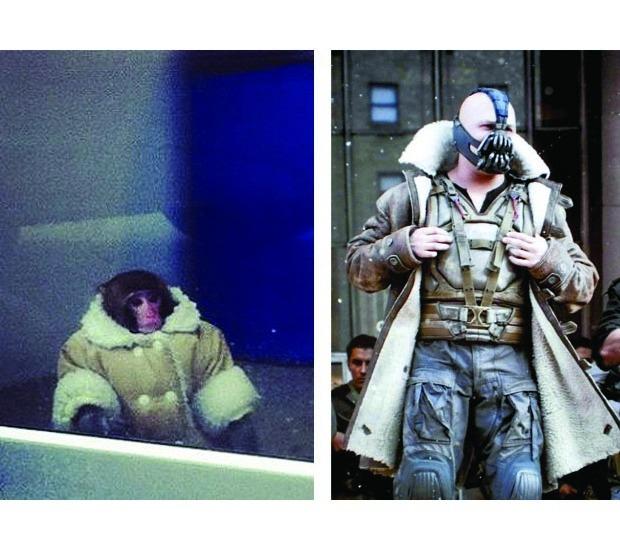 В Канаде обезьяна в пальто зашла в магазин IKEA. Изображение №14.