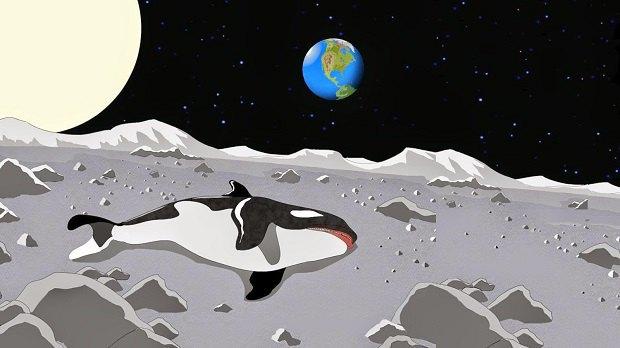 Мёртвых животных теперь можно отправить в космос. Изображение № 1.