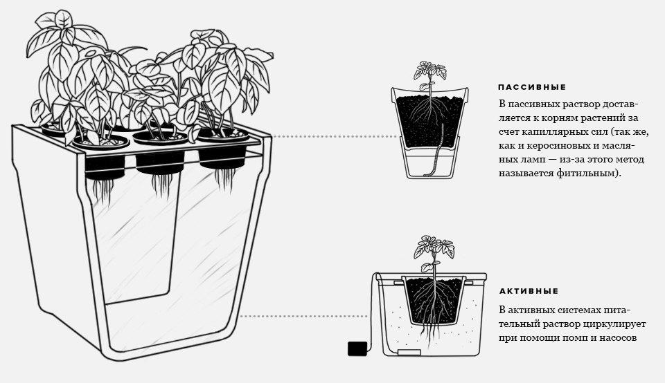 Ультимативный гид по выращиванию в домашних условиях. Изображение № 3.