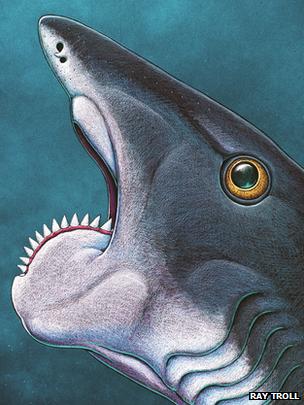 Ученые восстановили внешний вид рыбы — циркулярной пилы. Изображение № 2.
