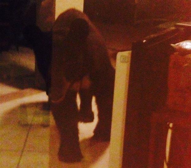 Пьяный медведь ограбил дом во Флориде. Изображение № 4.