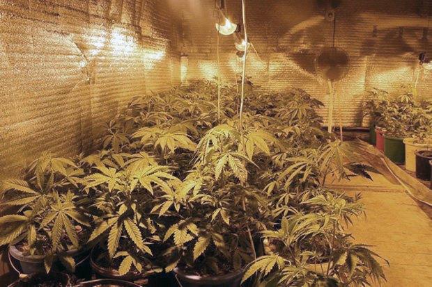 В британской психлечебнице нашли плантацию марихуаны. Изображение № 1.