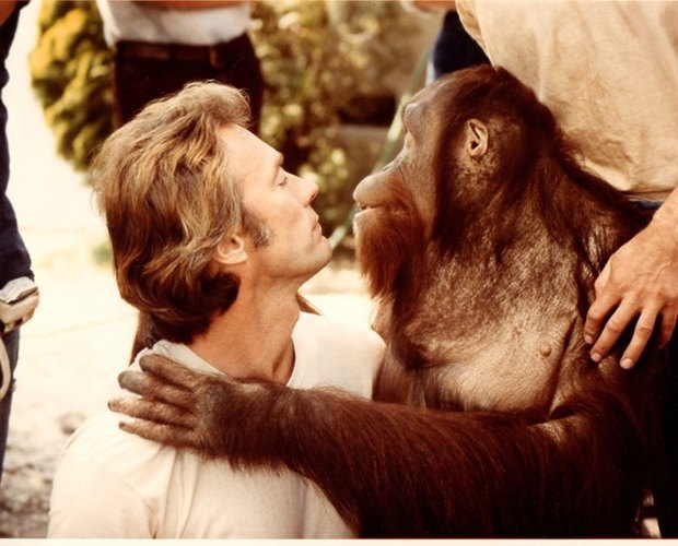 10 обезьян, ставших медийными персонами. Изображение № 7.