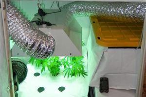 Противника легализации марихуаны арестовали за ее хранение. Изображение № 2.
