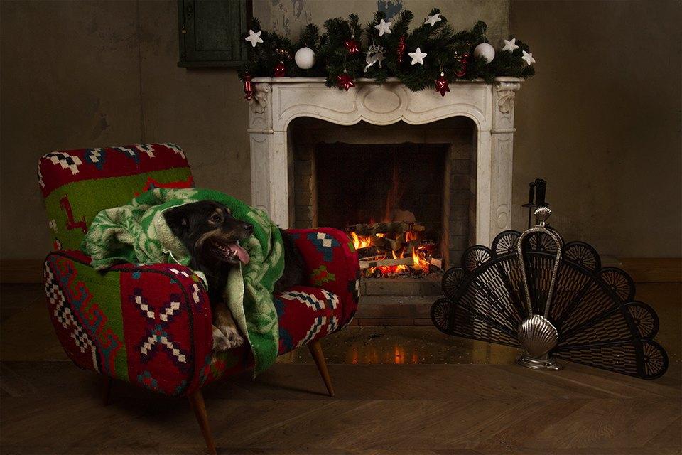 Ревизия пледов: Счастливого тебе Рождества, старый пёс. Изображение № 6.