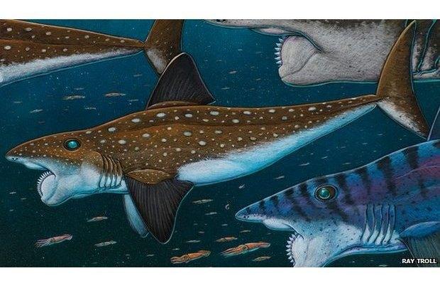 Ученые восстановили внешний вид рыбы — циркулярной пилы. Изображение № 1.