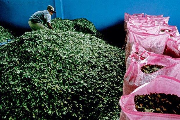 Британские ученые требуют открыть заводы по производству коки. Изображение № 1.