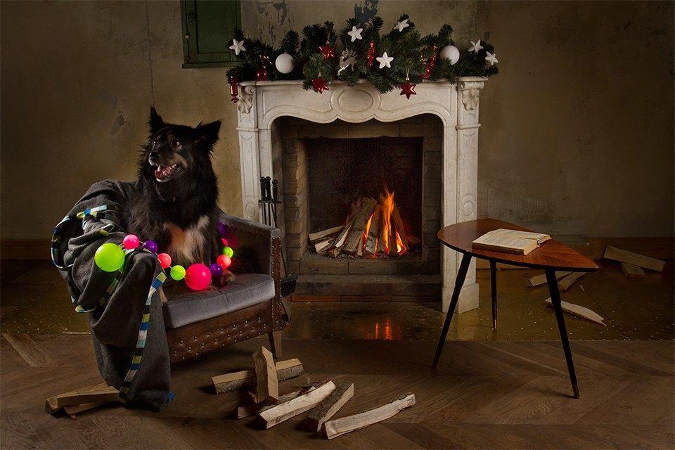 Ревизия пледов: Счастливого тебе Рождества, старый пёс. Изображение № 2.